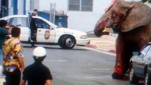 elefante-630x355