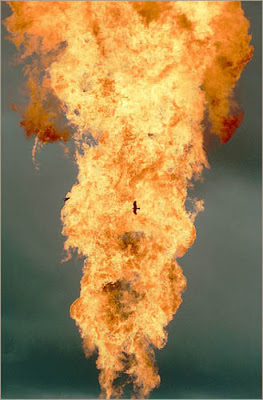 A bird flies near the roaring column of flame.