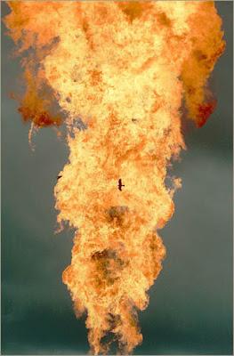 A bird flies near the roaring column of flame.