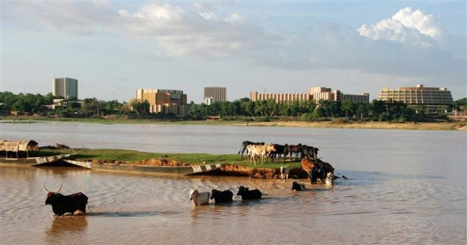 Cows wade across a river beneath the skyline of Niamey, the capital of Niger